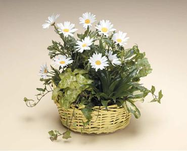 Basket of Green and Daisies